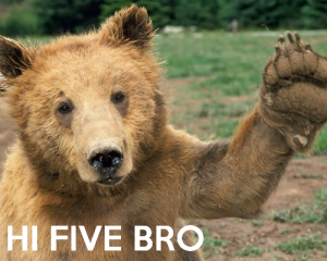 -hi-five-bro